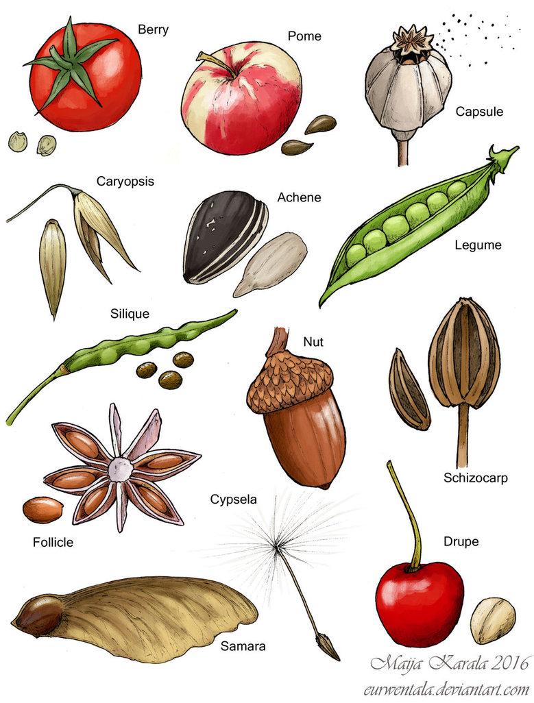 Types of Fruit by Eurwentala Illustration